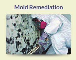 Mold Remediation South Florida