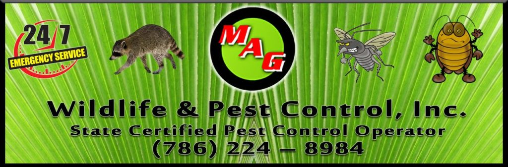 MAG Wildlife  Pest Control offers services across Miami Dade, Broward and Palm Beach Counties in South Florida - a Florida State Certified Pest Control Operator