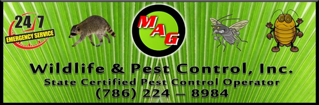 MAG Wildlife  Pest Control